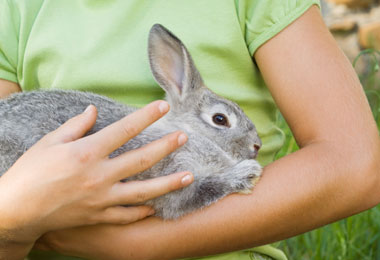 Tips for Choosing Cruelty-Free Products