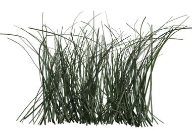Lemongrass Cleanser