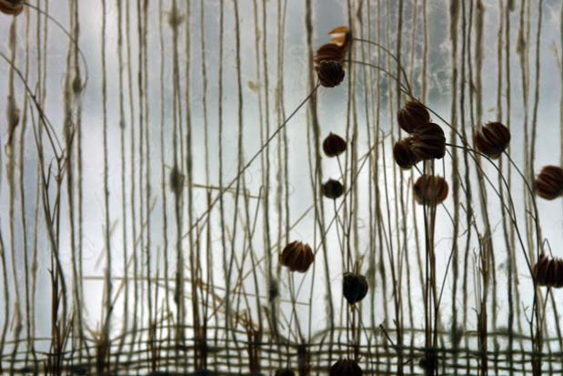 flax-seed1.jpg