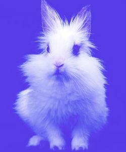 2 Big Steps Towards Ending Animal Testing In Beauty