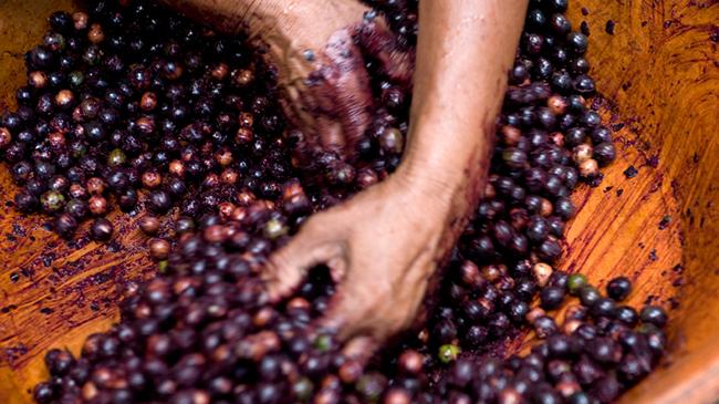 acai berries for acai butter