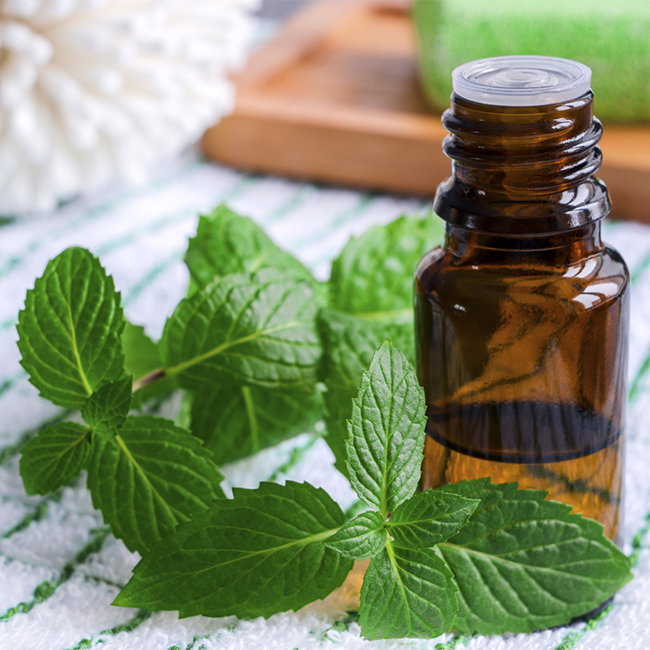 Image result for mint aromatherapy png